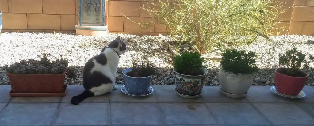 Cat in the line with flowerpots